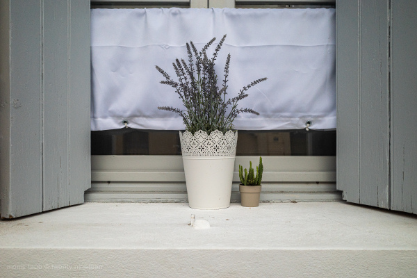 Two plants on a window sill in france.