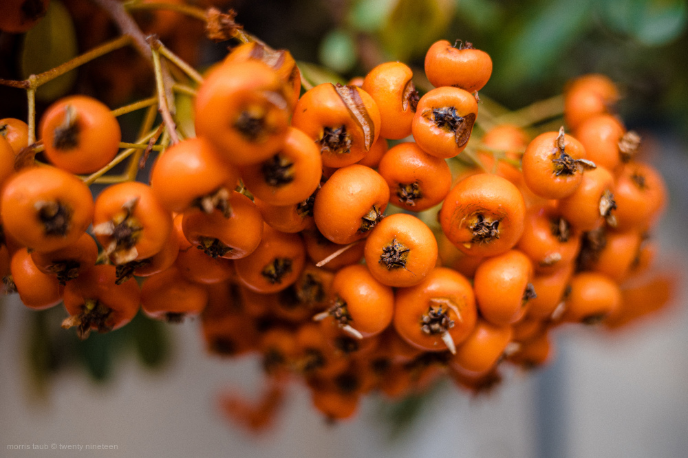 Orange beads on a tree.