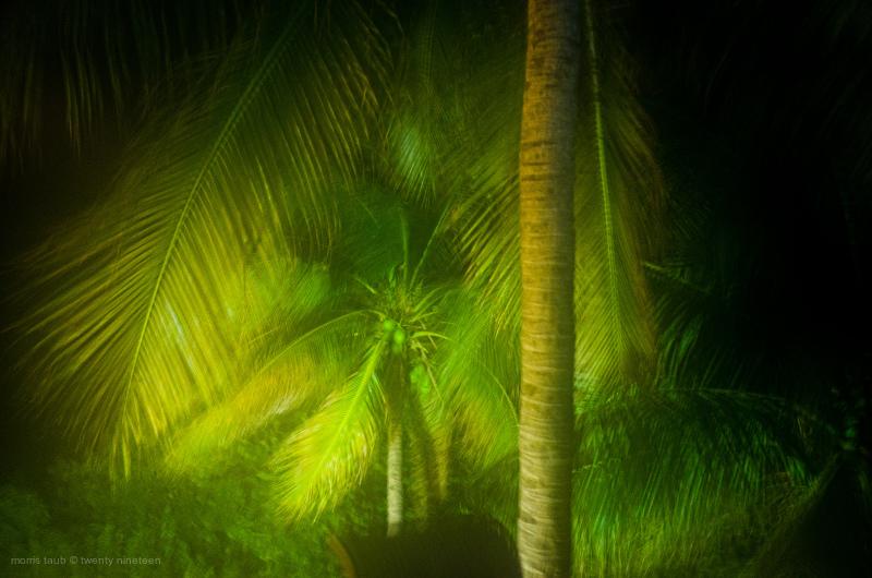 Palm trees at night. Miami Beach, FLA.