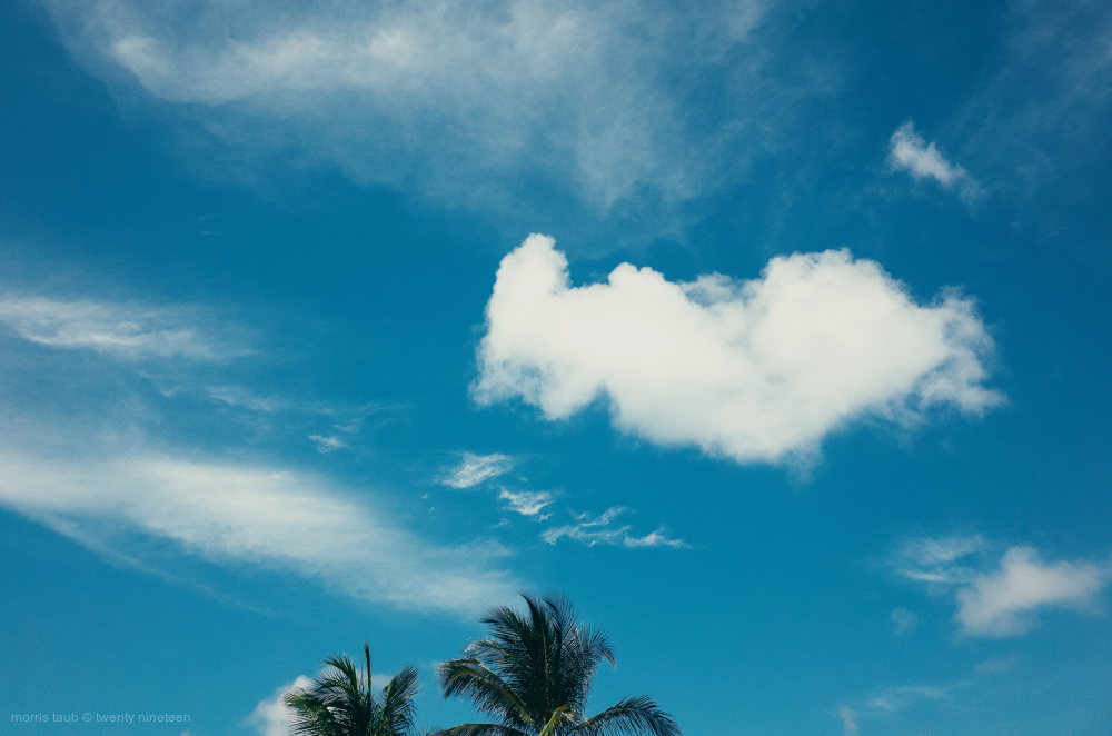 Palm trees and white puffy clouds. Miami Beach.