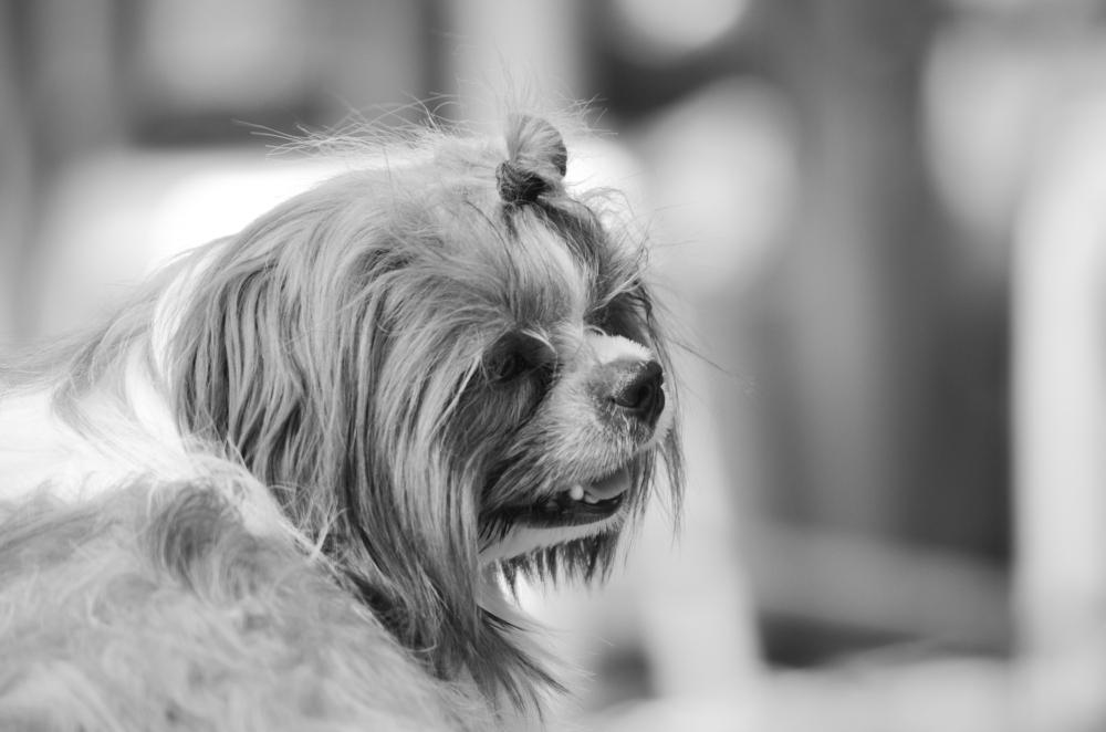 Female Dog I