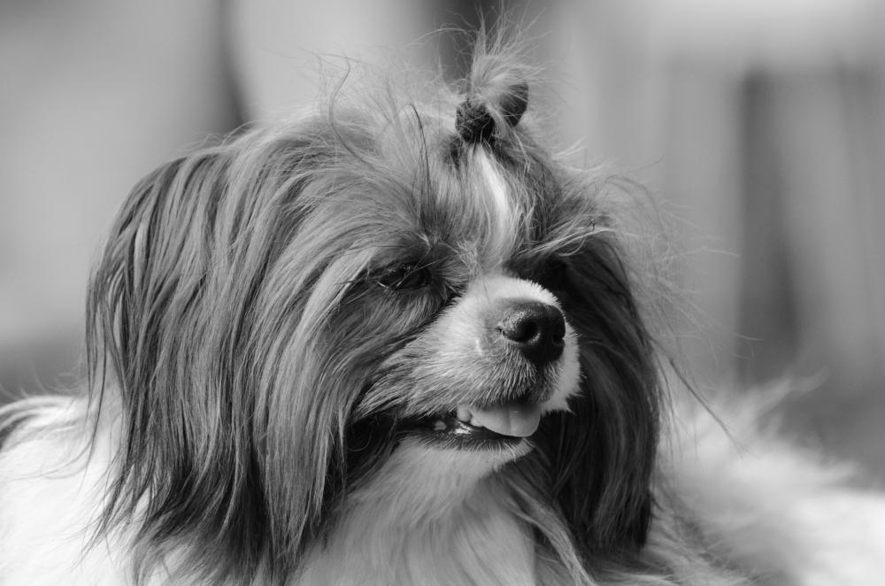 Female Dog II