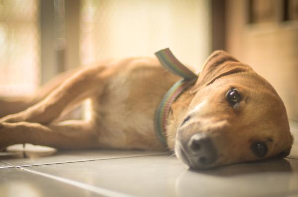 Our Dog Bogart!