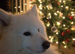 I smell reindeer!