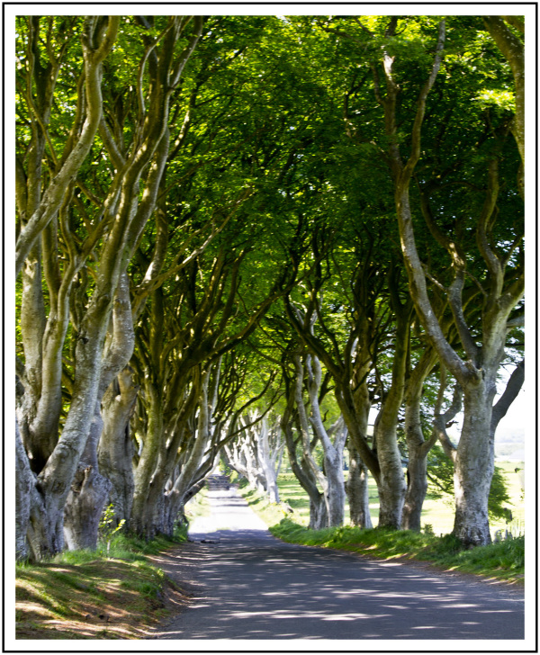 Game of Thrones: The Dark Hedges