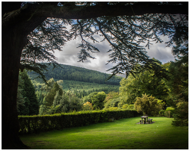 Tollymore Forest