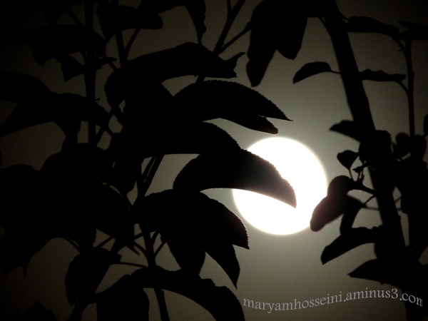 ماه من .....