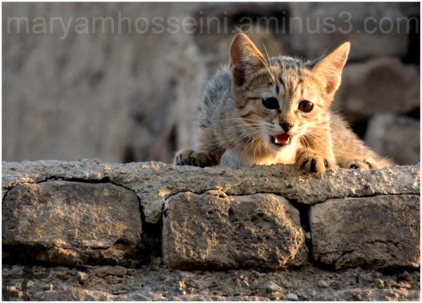 گربه ای روی پشت بام خانه روبرویی!