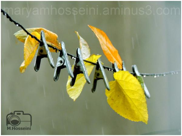 پاییز ....
