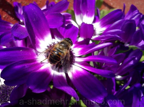 زنبور و گل