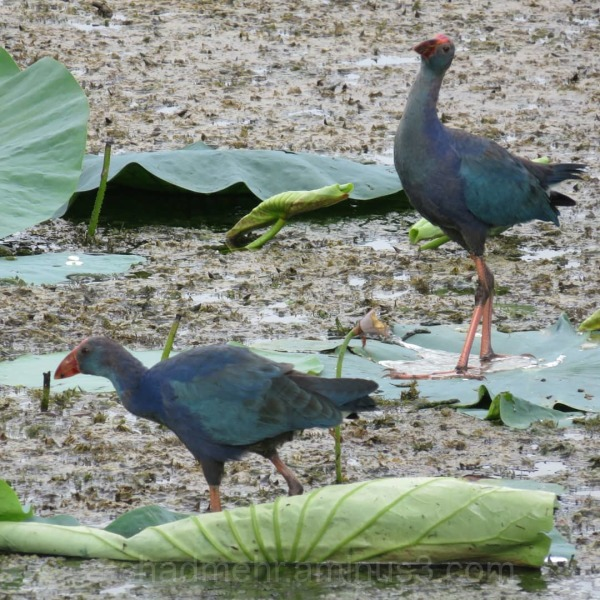 طاووسک گیلان