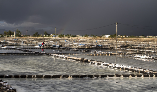 Tamarin (Mauritius)