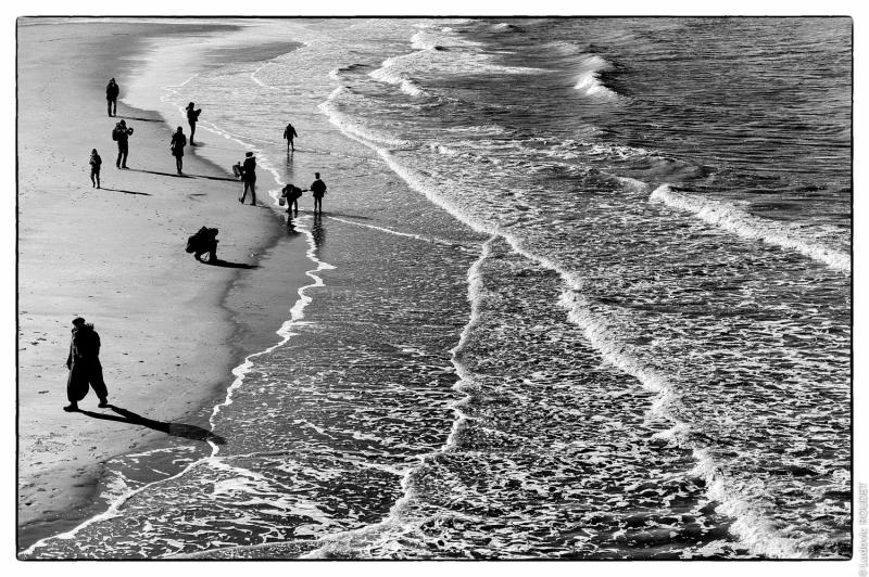 Beach Fisheries