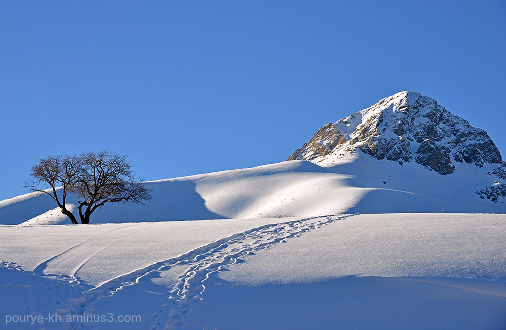 nature tree snow winter mountain Hawraman