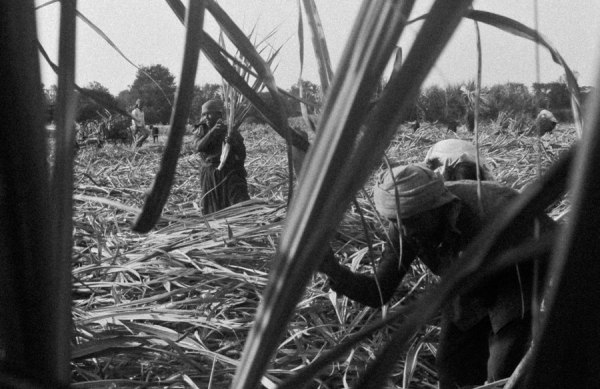 migrated sugarcane workers