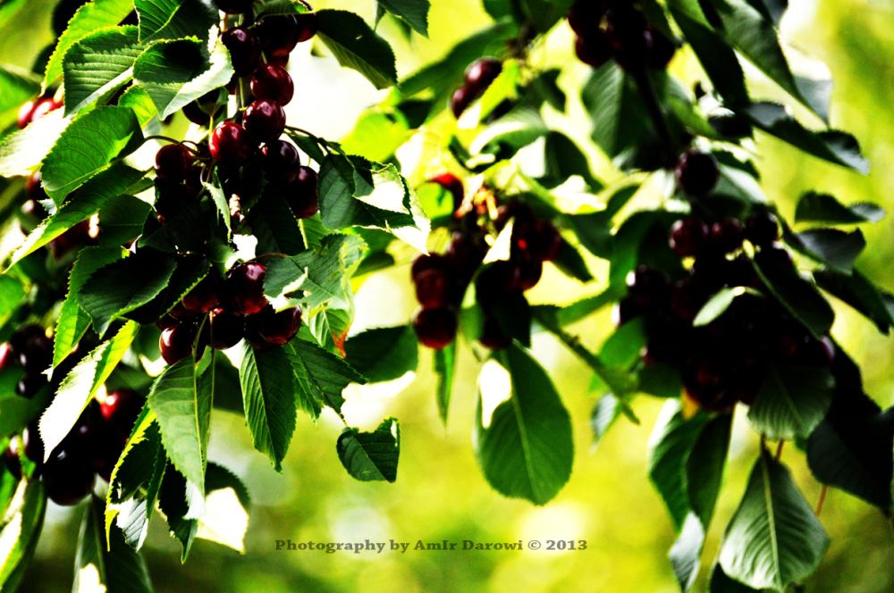 Photography by AmIr Darowi © 2013 ( امیــر دروی)