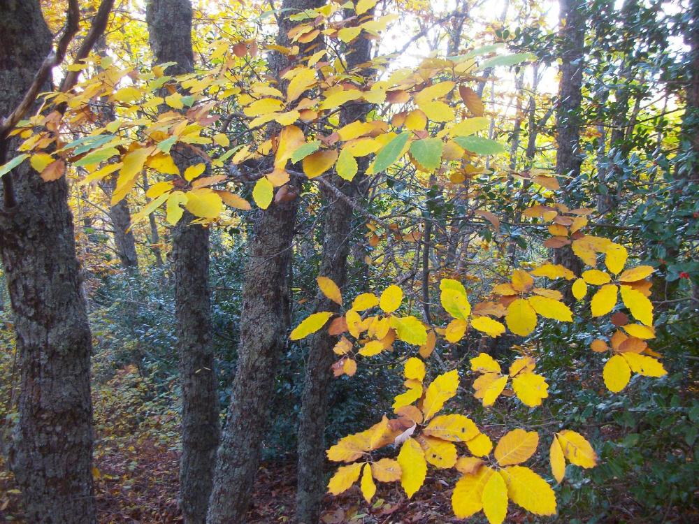 otoño por la Honfría...