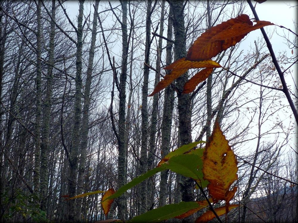 hojas otoñales