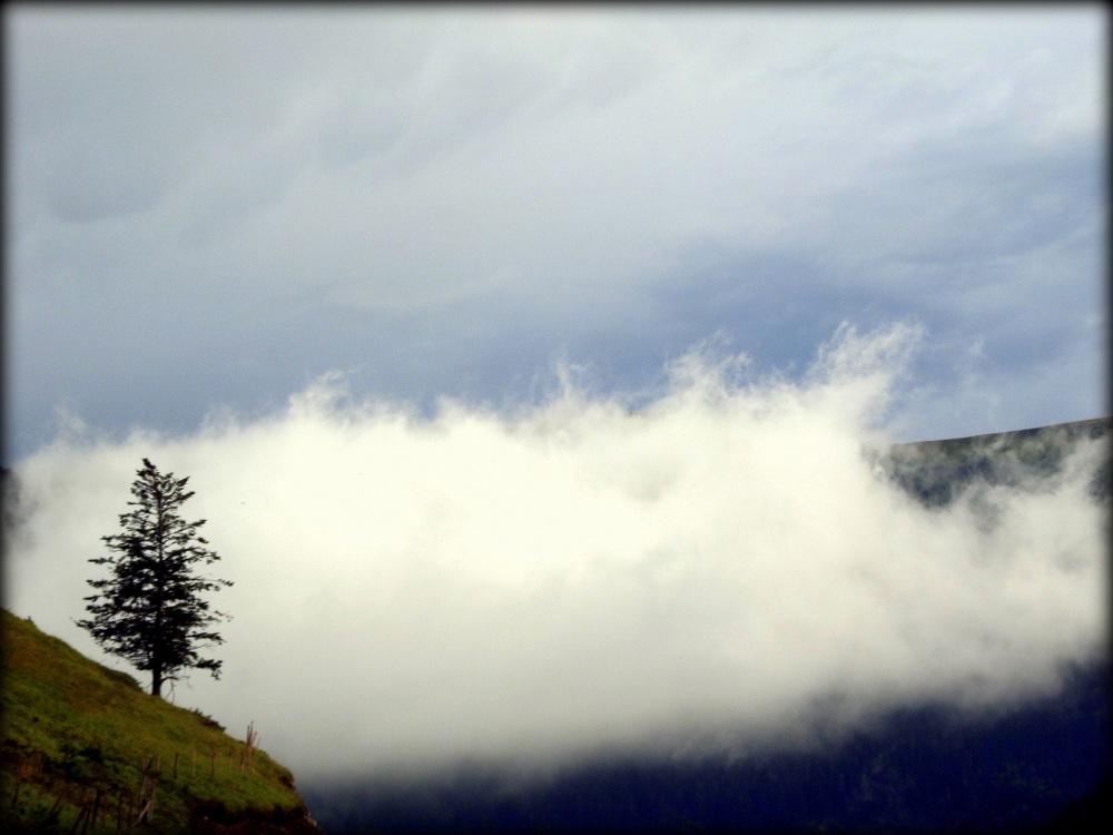pino y nube