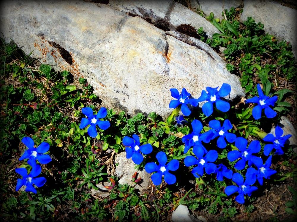 florecillas