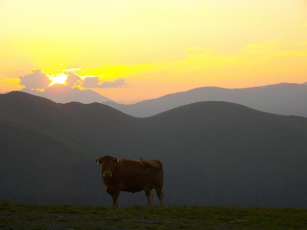 mira la vaca