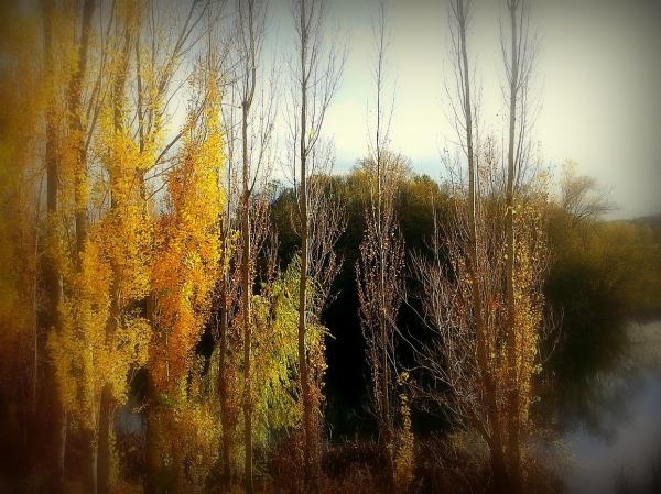otoños...