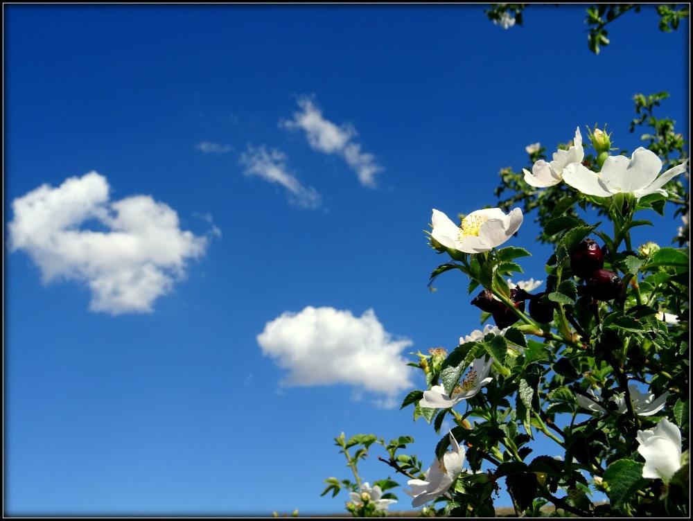 flor y nube