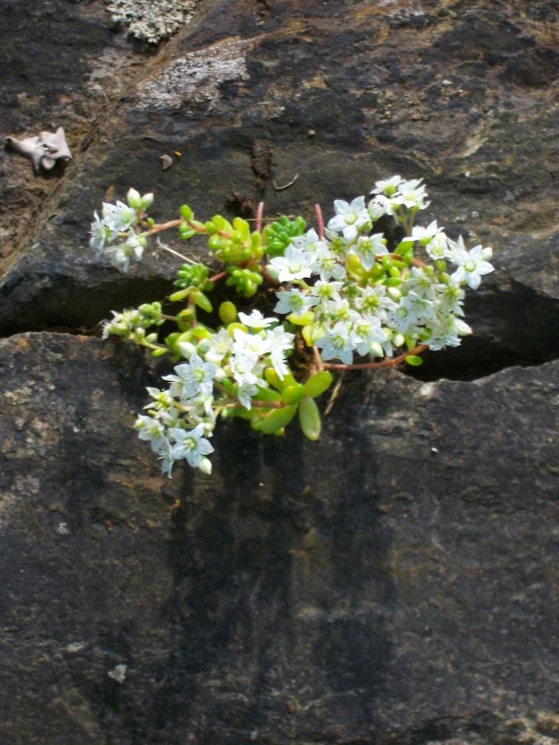 flor en piedra