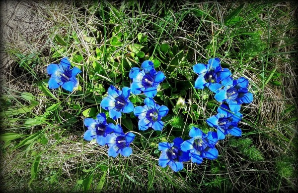 florecilllas
