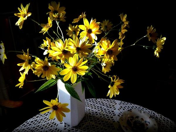 Flor: osteospermun.