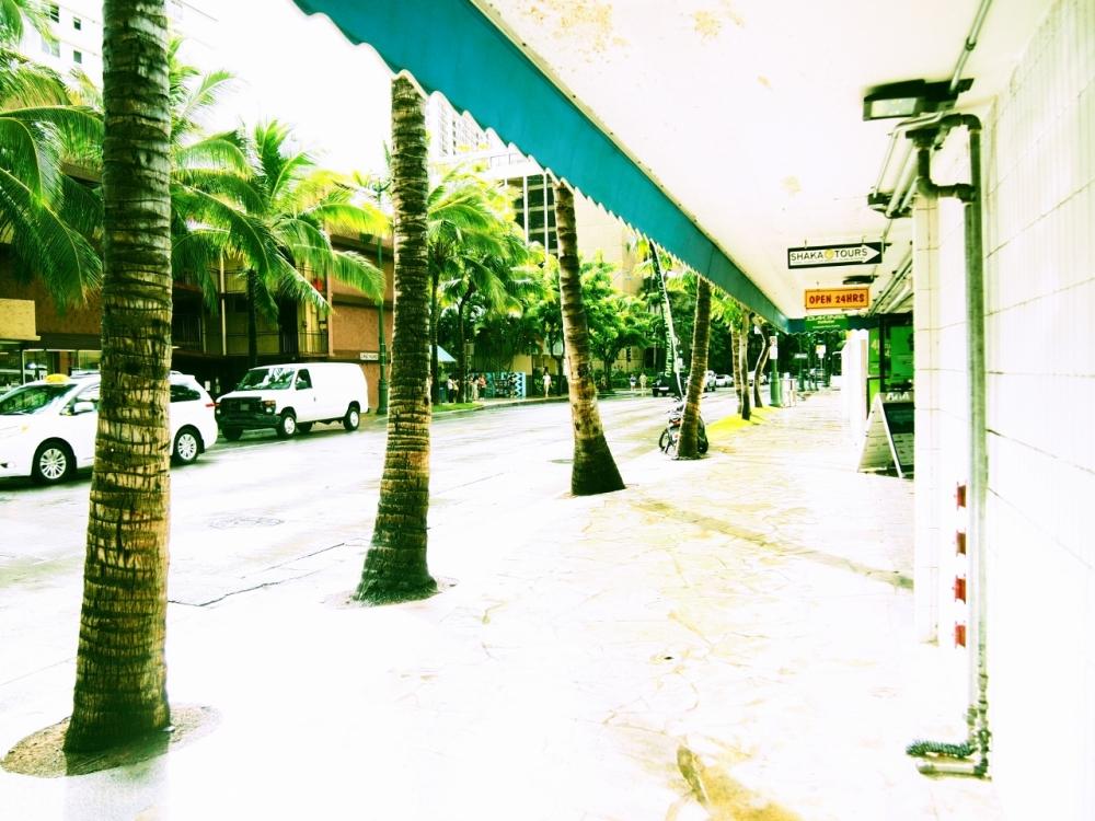 Palms in Kuhio