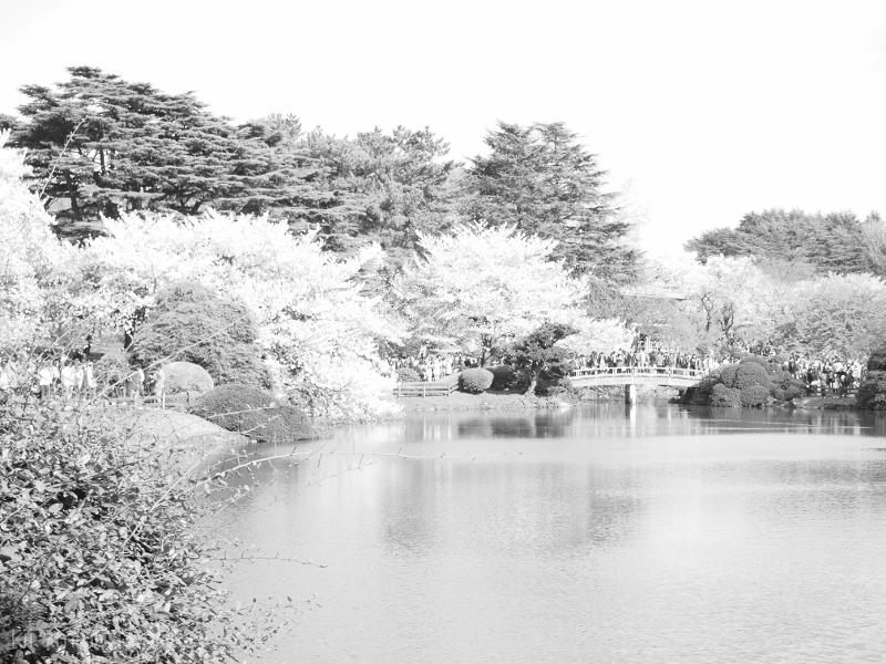 Sakura Garden in Tokyo
