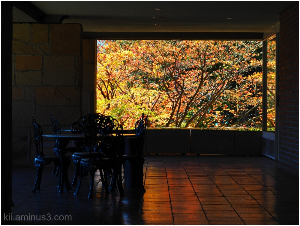 Autumn Window