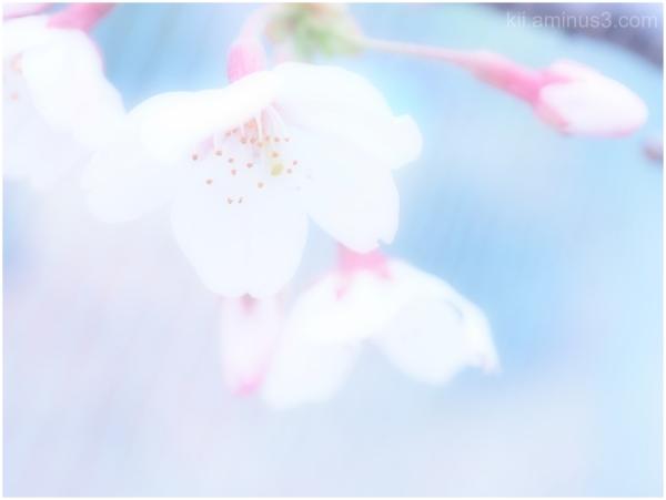 Sakura 2016, no.2