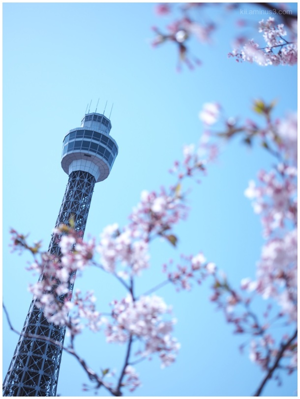 Sakura and the Yokohama Marine Tower