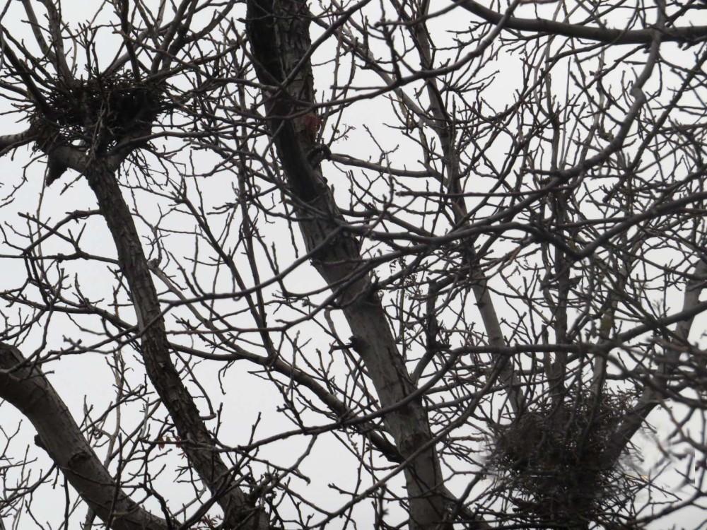 Nest...
