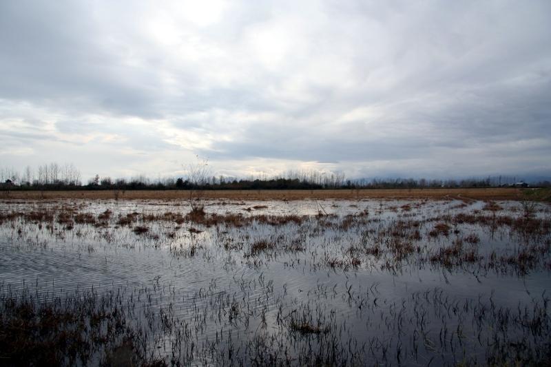Rice farm after Harvest