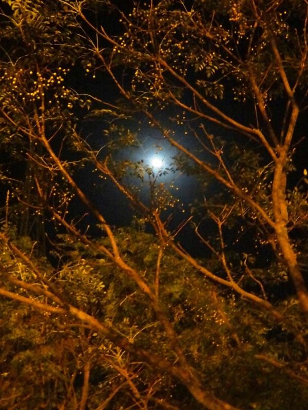ماه بالاي سر آباديست