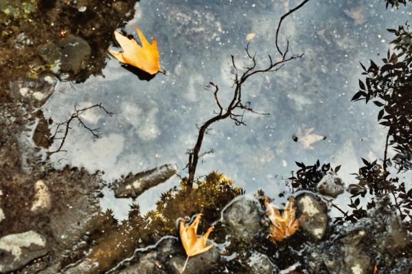 Water، air، soil، fire