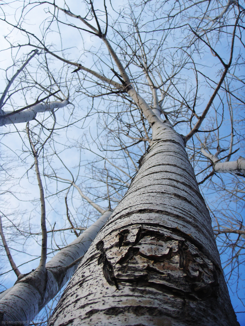 ~|Tree|~