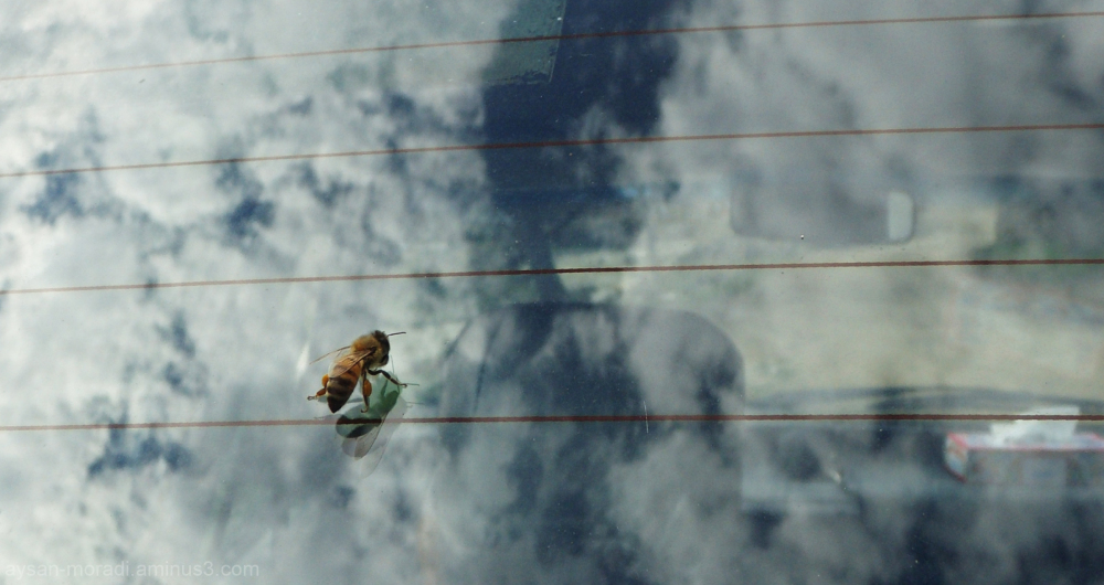 Bee on clouds (:
