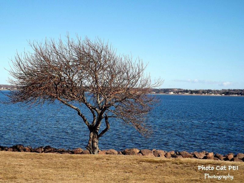 Tree along Victoria Park Shoreline