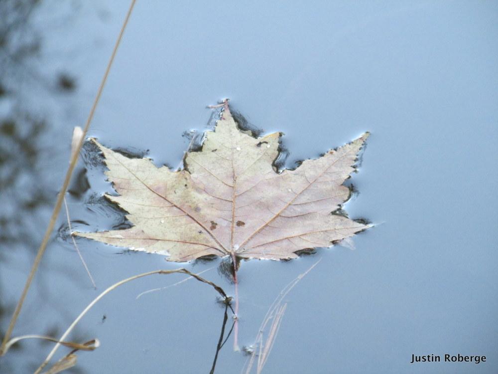 Cruising Leaf