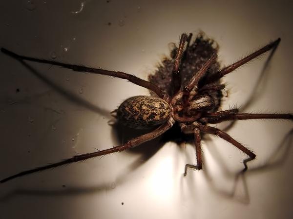 Spider loves rust