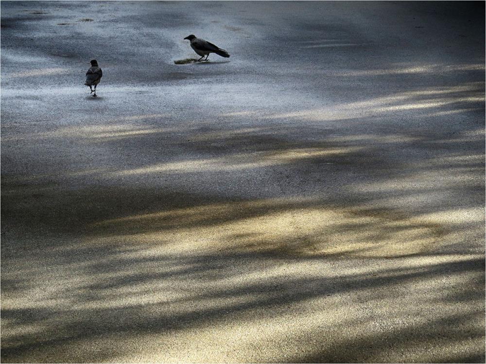p.m. crows