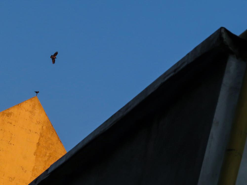 Crow / Mount