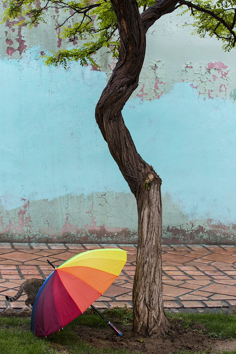 Nature umbrella