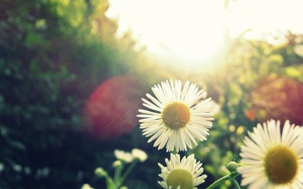 4 - گل همیشه بهار
