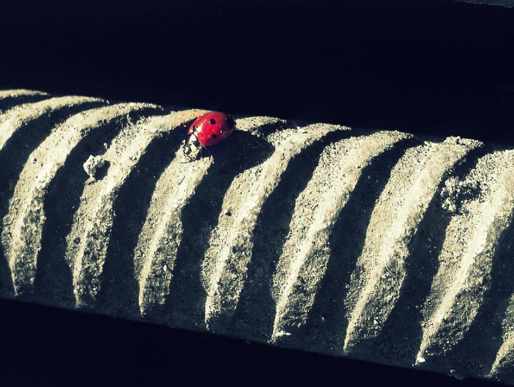 5 - Ladybird