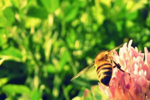 8 - Bee